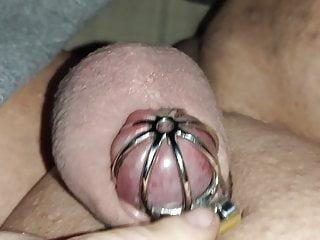 Pig tiny clit 7 chastity...